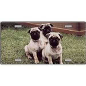 Pug Dog Pet Novelty License Plates Full Color Photography